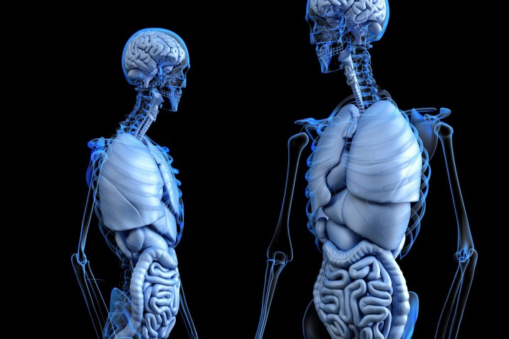 Bone Density and the Big Bad Wolff's Law