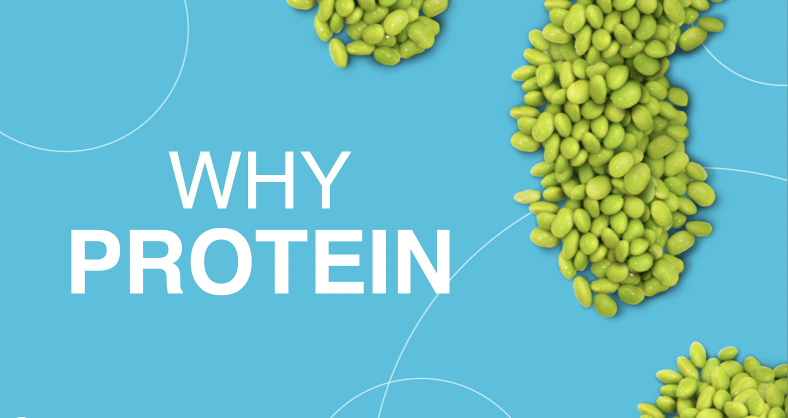 Why to Eat Protein